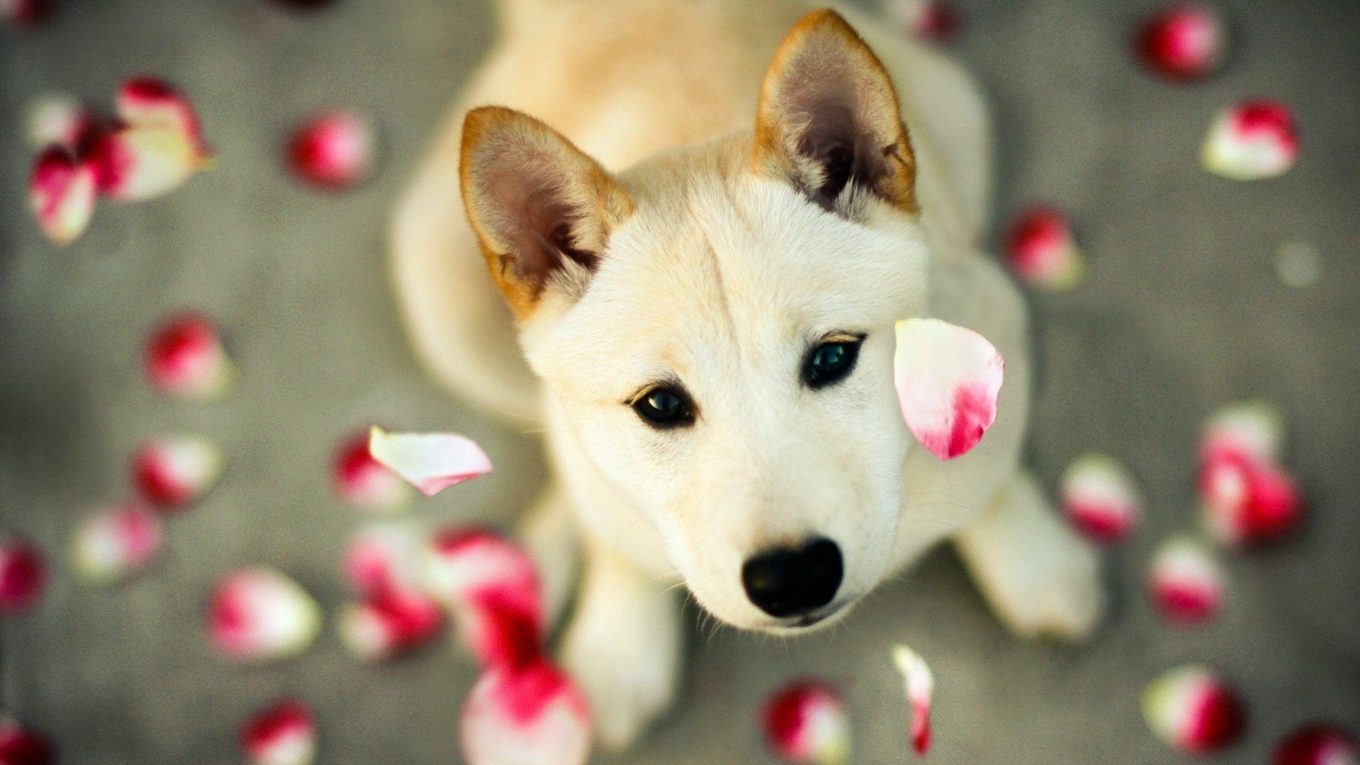 Κομμωτήριο Σκύλων Νέος Κόσμος