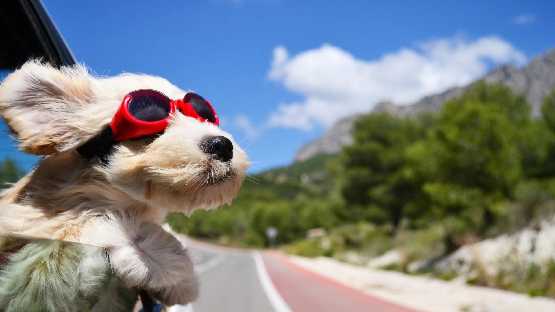 Κομμωτήριο Σκύλων Παγκράτι